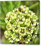 Pollination Happening Canvas Print
