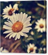 Pollination Love  Canvas Print
