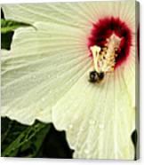 Pollinator Canvas Print
