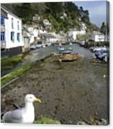 Polperro Harbour Cornwall And Seagull Canvas Print