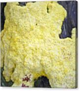 Polymyxa Slime Mold Canvas Print