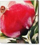 Pomegranate On A Pineapple Stalk Canvas Print
