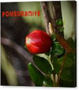 Pomegranite Art II Canvas Print