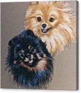Pomeranian Pair Canvas Print