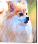 Pomeranian Portrait Canvas Print
