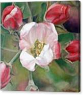 Pommier Canvas Print