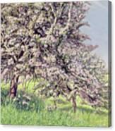 Pommiers Fleuris Canvas Print