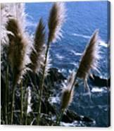 Pompas Grass2 Canvas Print