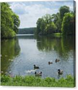Pond And Ducks Canvas Print