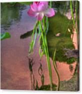 Pond Dreams10 Canvas Print
