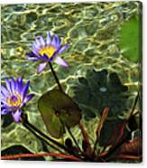 Pond Florals Canvas Print