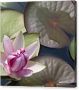 Pond Flower Canvas Print