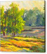 Pond In Morning Light Canvas Print