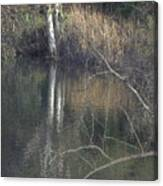 Pond In The Hollow Canvas Print