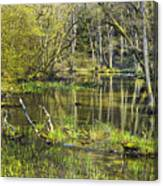 Pond In The Undergrowth. Canvas Print