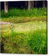Pond Landscape Print Canvas Print