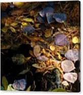 pond leaves RIV M 23 Canvas Print