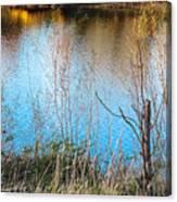 Pond Life Canvas Print