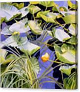 Pond Lilies Canvas Print