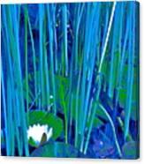 Pond Lily 6 Canvas Print
