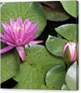 Pond Lily And Bud Canvas Print