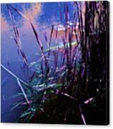 Pond Reeds At Sunset Canvas Print