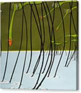 Pond Skaters Canvas Print
