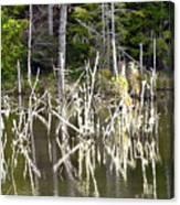 Pond Sticks Canvas Print