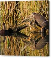 Pond Turtles Canvas Print