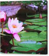 Pond With Water Lilly Flowers Canvas Print