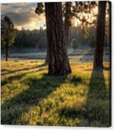 Ponderosa Pine Meadow Canvas Print