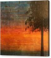 Ponderosa Pine Canvas Print