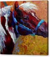 Pony Boy Canvas Print