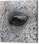 Pony Eye Canvas Print