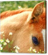 Pony In The Poppies Canvas Print