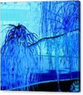 Pony Tail Blue Canvas Print
