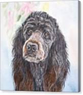 Poodle Mix  Canvas Print