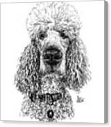 Poodle @standerdpoodle Canvas Print