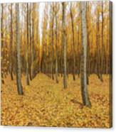 Poplar Tree Farm In Oregon Canvas Print