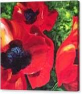 Poppie Love Canvas Print