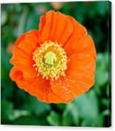 Poppie Canvas Print