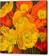 Iceland Poppies 2 Canvas Print