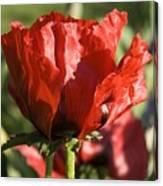 Poppies 5 Canvas Print