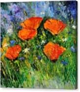 Poppies 79 Canvas Print