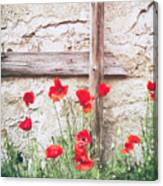 Poppies Against Wall Canvas Print
