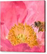 Poppies And Bumble Bee Canvas Print