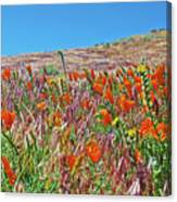 Poppies And Fiddleneck In Antelope Valley Ca Poppy Reserve Canvas Print