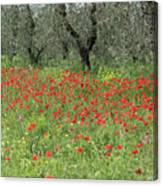 Poppies And Olives Canvas Print