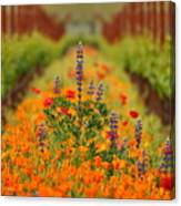 Poppies And Wildflowers In Vineyard Canvas Print