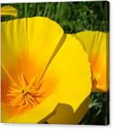 Poppies Art Poppy Flowers 4 Golden Orange California Poppies Canvas Print